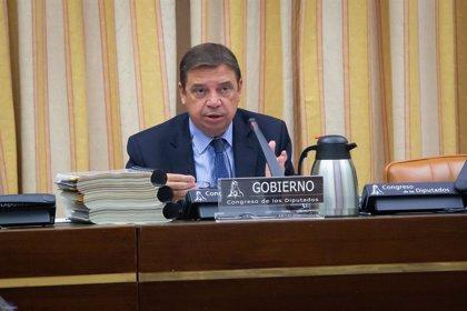 Planas aprobará este año la reforma de la cadena alimentaria y prepara la autorregulación del olivar
