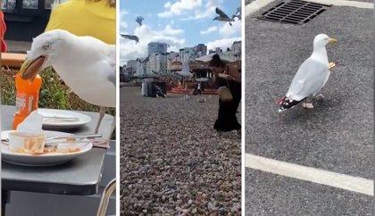 Las gaviotas de estos vídeos protagonizan escenas tan divertidas como surrealistas
