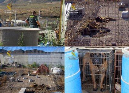 Investigan al propietario de un criadero de perros de Mazarrón por una veintena de canes en pésimo estado