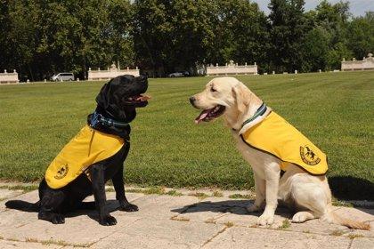 La Fundación ONCE del Perro Guía cumple 30 años con 45 canes en Castilla y León