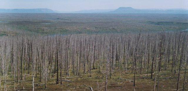 Los anillos de árboles alertan de una polución agravada del Ártico ruso