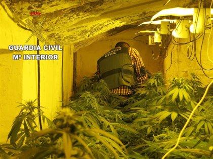 Tres detenidos en Almería por cultivar marihuana en la segunda residencia de padres octogenarios de dos de ellos