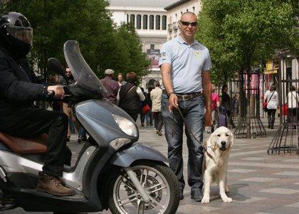 La Fundación ONCE del Perro Guía cumple 30 años con más de 170 perros en Andalucía