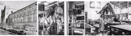 El MNCN presentará el martes el libro 'Del Elefante a los dinosaurios' que narra la historia del museo desde 1939 a 1985