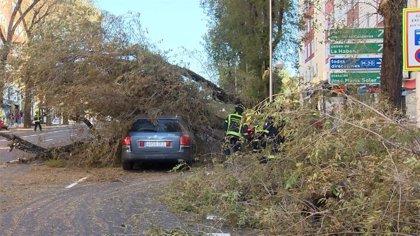Bomberos de Madrid realizan 135 intervenciones esta mañana por problemas ocasionados por el fuerte viento