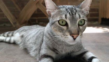 El Consell colabora con la Coordinadora Animalista para la celebración del primer Congreso Felino de la Comunitat