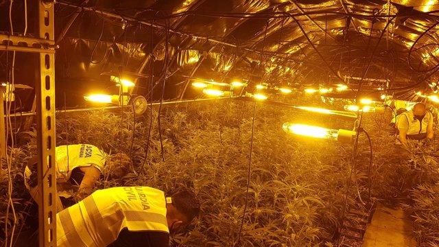 Desarticulat un grup criminal per tràfic internacional de marihuana