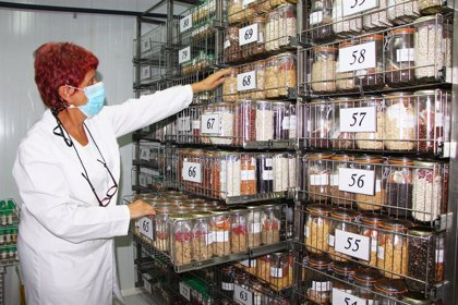 Agricultura.- El banco de germoplasma del IMIDA conserva más de 9.000 variedades vegetales comestibles y silvestres
