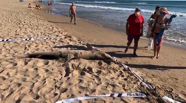 Tiburón muerto en Guardamar del Segura