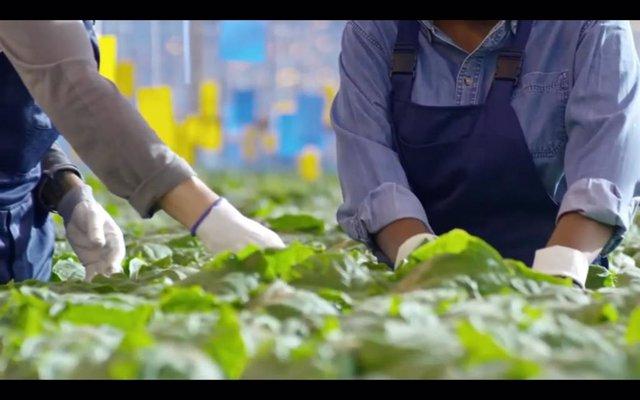 Agricultores trabajando con plantas
