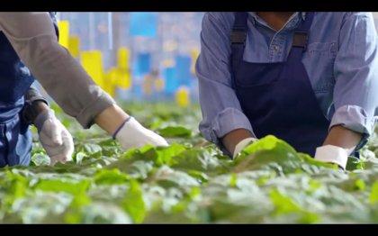 Agricultura presenta en 'Smart Agrifood' el primer congreso virtual Encuentros en el Mediterráneo