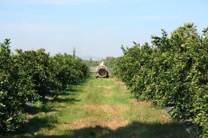Andalucía convoca ayudas por siete millones para jóvenes agricultores en el marco de la ITI de Cádiz