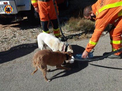 Bomberos rescatan a dos perros atrapados en un barranco en Teresa de Cofrentes (Valencia)