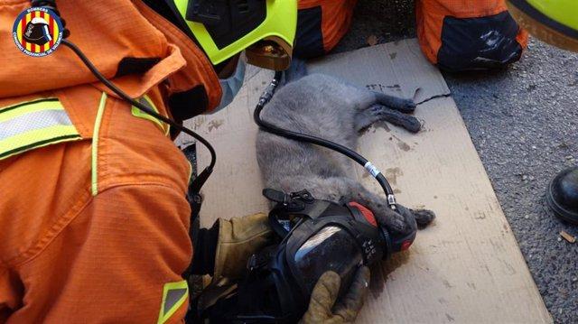 Bomberos asisten a un gato rescatado de un incendio