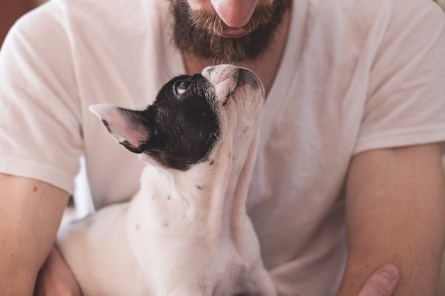 Perro, mascota
