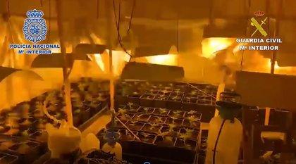 Desmantelado un cultivo 'indoor' de marihuana con 700 plantas en un chalé de Soto del Real