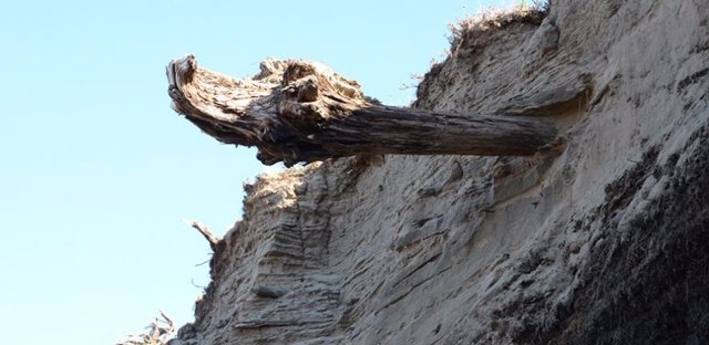 Árboles relacionan 2.000 años de actividad volcánica e historia humana