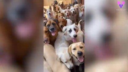 Sawnee Dog Retreat, el campamento-guardería para perros que hace las delicias de los amantes de estos animales