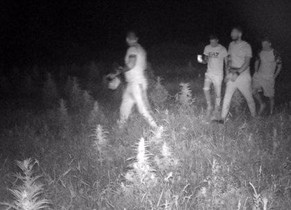 La Guardia Civil detiene a dos jóvenes por la sustracción de cáñamo industrial en Caravaca de la Cruz