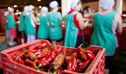 Agricultura informa al Consejo sobre convocatoria de 82 millones en tres líneas de ayudas a la industria agroalimentaria