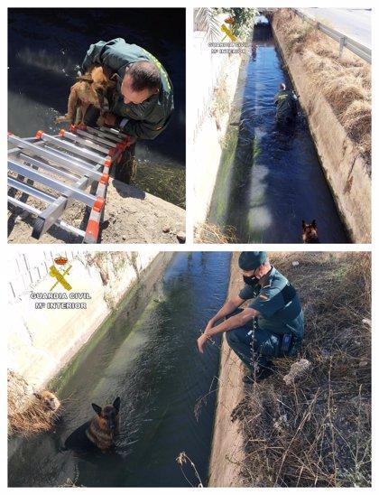 La Guardia Civil rescata a dos pastores alemanes que habían caído a una acequia en Monteagudo