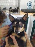 La Policía Local de Málaga denuncia por maltrato animal al dueño de un perro malherido por no proporcionarle cuidados 2