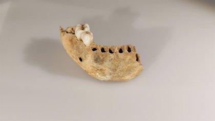 El MUPAC retoma el ciclo 'La pieza del mes' con una conferencia sobre la mandíbula infantil de la cueva de El Castillo