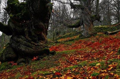El Valle del Ambroz-Cáparra y La Siberia obtienen la financiación para sus planes de sostenibilidad turística