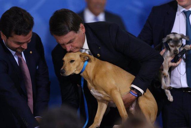 """Brasil.- Bolsonaro tacha de """"lamentable"""" una propuesta de Biden para proteger la"""
