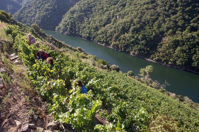 Músicos católicos españoles hacen un llamamiento al cuidado del planeta durante