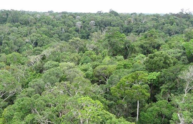 Gran parte de la selva amazónica en riesgo de convertirse en sabana