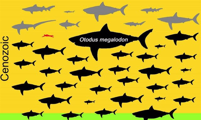 Dibujo esquemático que muestra la distribución de los tamaños máximos posibles de todos los 70 géneros (grupos) no planctívoros conocidos en el orden de tiburones Lamniformes.
