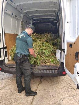 Pla general d'un agent de la Guàrdia Civil manipulant les plantes de marihuana localitzades a Aiguamúrcia i ja carregades en una furgoneta. (vertical)