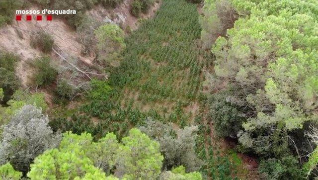 Imatge aèria de la plantació desmantellada. (Horitzontal)