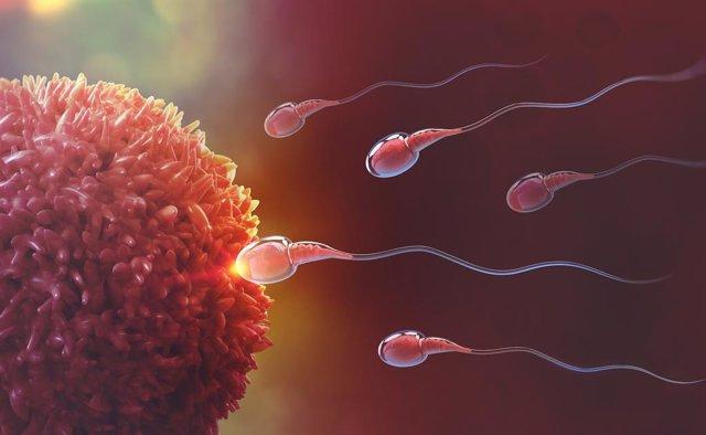 Identifican un biomarcador de esperma asociado con la probabilidad de embarazo d