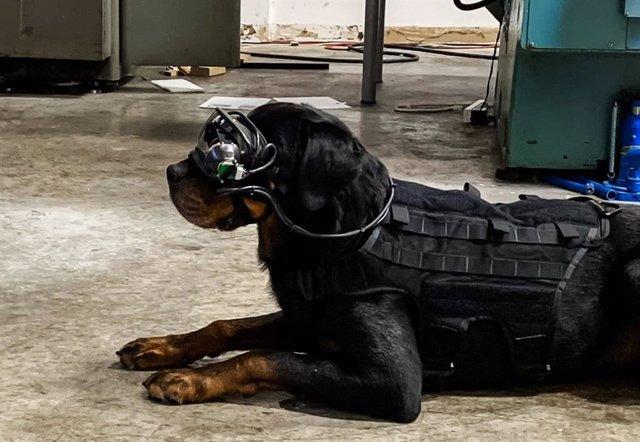 Los perros militares de EEUU llevarán gafas de RA para recibir mejor las órdenes