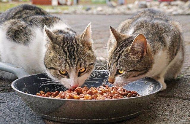 La comida para mascotas excede en huella de carbono a Filipinas