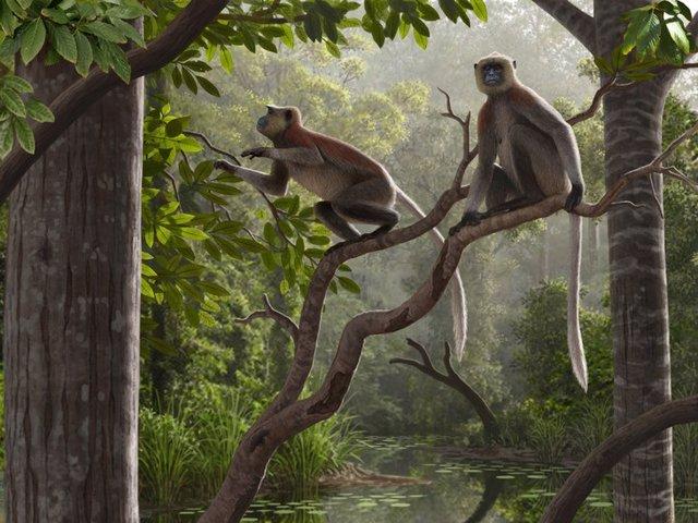 Excavados en China los fósiles de mono más antiguos fuera de África