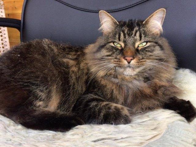 Nueva receta para mejorar el vínculo gato-humano: entrecerrar los ojos