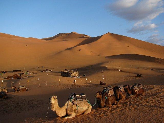 Desierto del Sáhara - Archivo