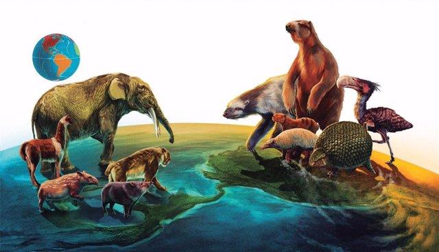 El intercambio de fauna entre América del Norte y del Sur