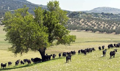 PSOE-A pide a la Junta apoyo para la ganadería extensiva y propone una batería de medidas