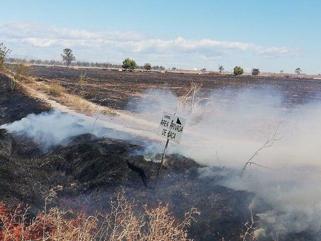 Pla general de part de la superfície cremada a l'incendi agrícola entre Beliana i Vilanova de Bellpuig. Imatge de l'11 d'octubre del 2020 (Horitzontal)
