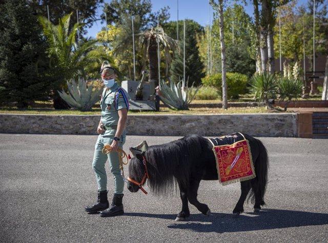 Un soldado pasea al poni de la Legión en el Campamento de Ronda, Málaga, Andalucía, (España). Este 2020 está marcado por el 100 aniversario de la Legión celebrado el pasado 20 de septiembre y por la crisis del Covid-19.