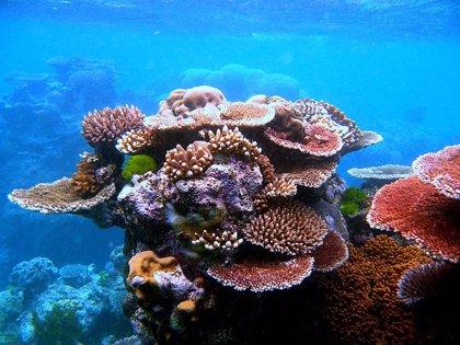 La Gran Barrera de Coral pierde la mitad de corales en tres décadas