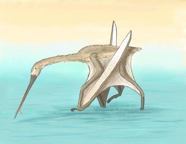 Nueva especie única de pterosuario con largo pico de kiwi