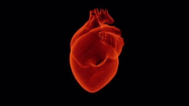 Un estudio revela por primera vez los nutrientes que utilizan los corazones norm