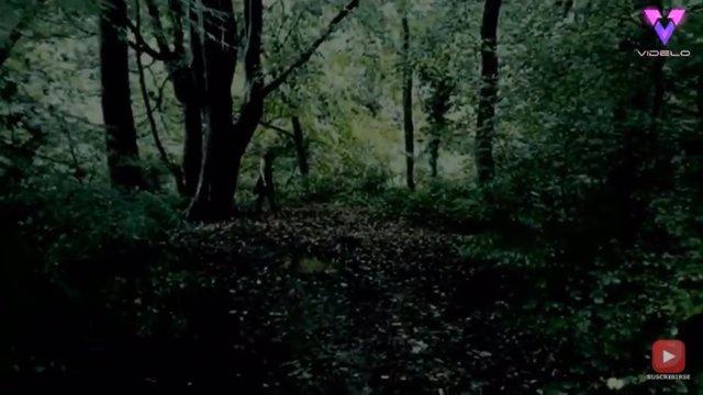 Un cazador de fantasmas afirma haber visto a 'la niña fantasma de ojos negros' en el bosque de Cannock Chase, Inglaterra