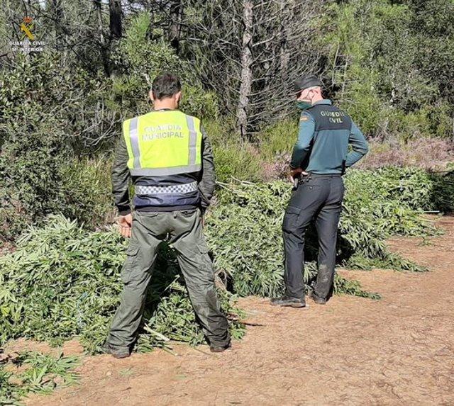 Pla general de la plantació de marihuana descoberta a Sils. Foto publicada el 16 d'octubre del 2020 (horitzontal)