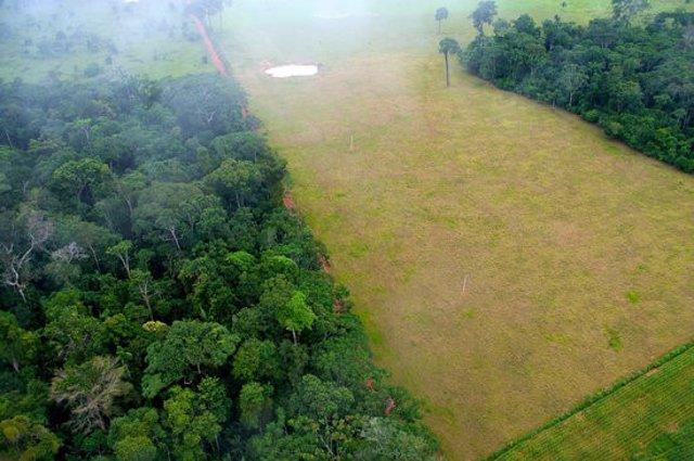 Pla general on es pot veure el contrast entre zones forestals i agrícoles a Acre (Brasil). (Horitzontal)